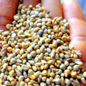 Dehulled Millet Gluten Free 1