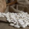 Large White Kidney Beans_4