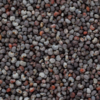 Poppy Seed 3