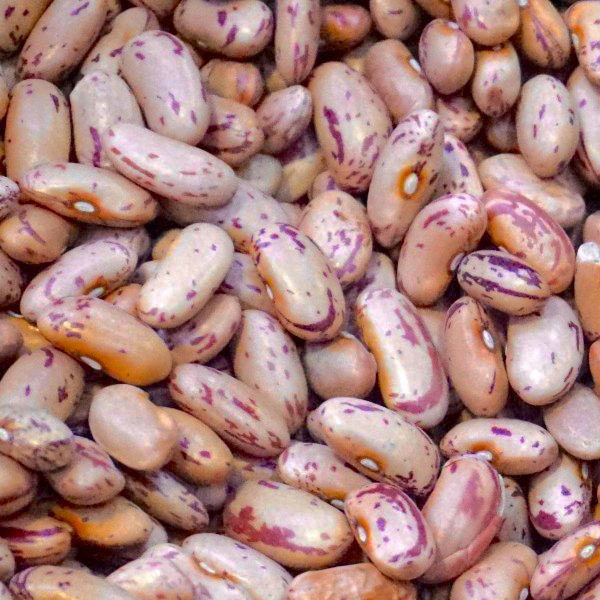 Red Speckled Sugar Beans 1