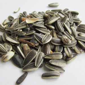 Sunflower Seeds 1