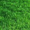 Bahia Grass 6
